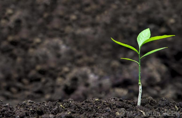soil-with-plant-sprout